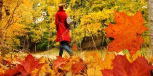 Une séance d'autohypnose … en plein mois d'automne
